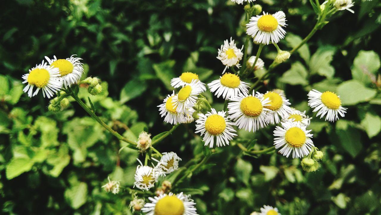 Flowers, Nature And Beauty Countryside Eye Em A Traveller Out For A Stroll Himachalpradesh Eyeemphoto