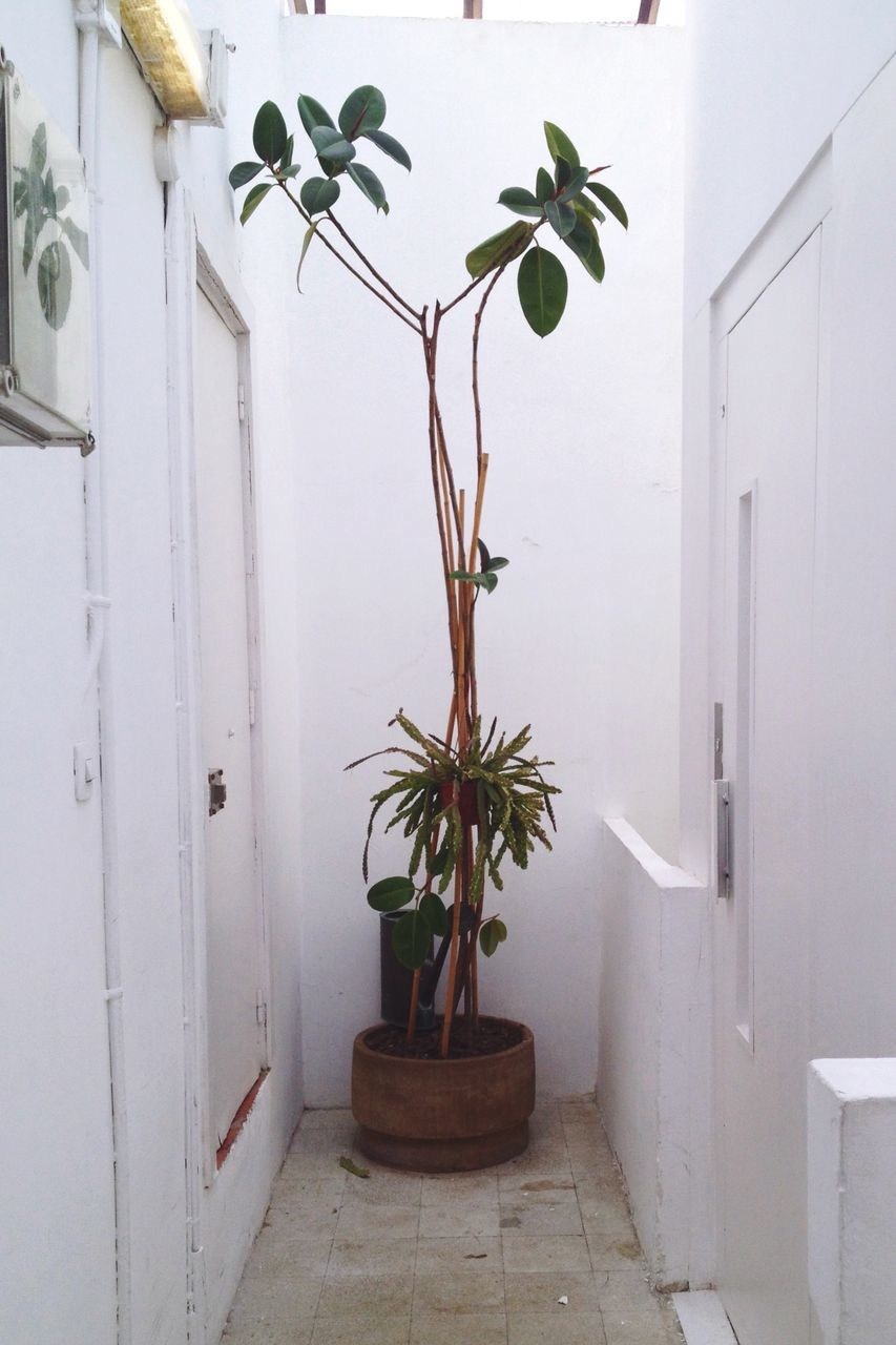 growth, potted plant, plant, leaf, no people, indoors, nature, day