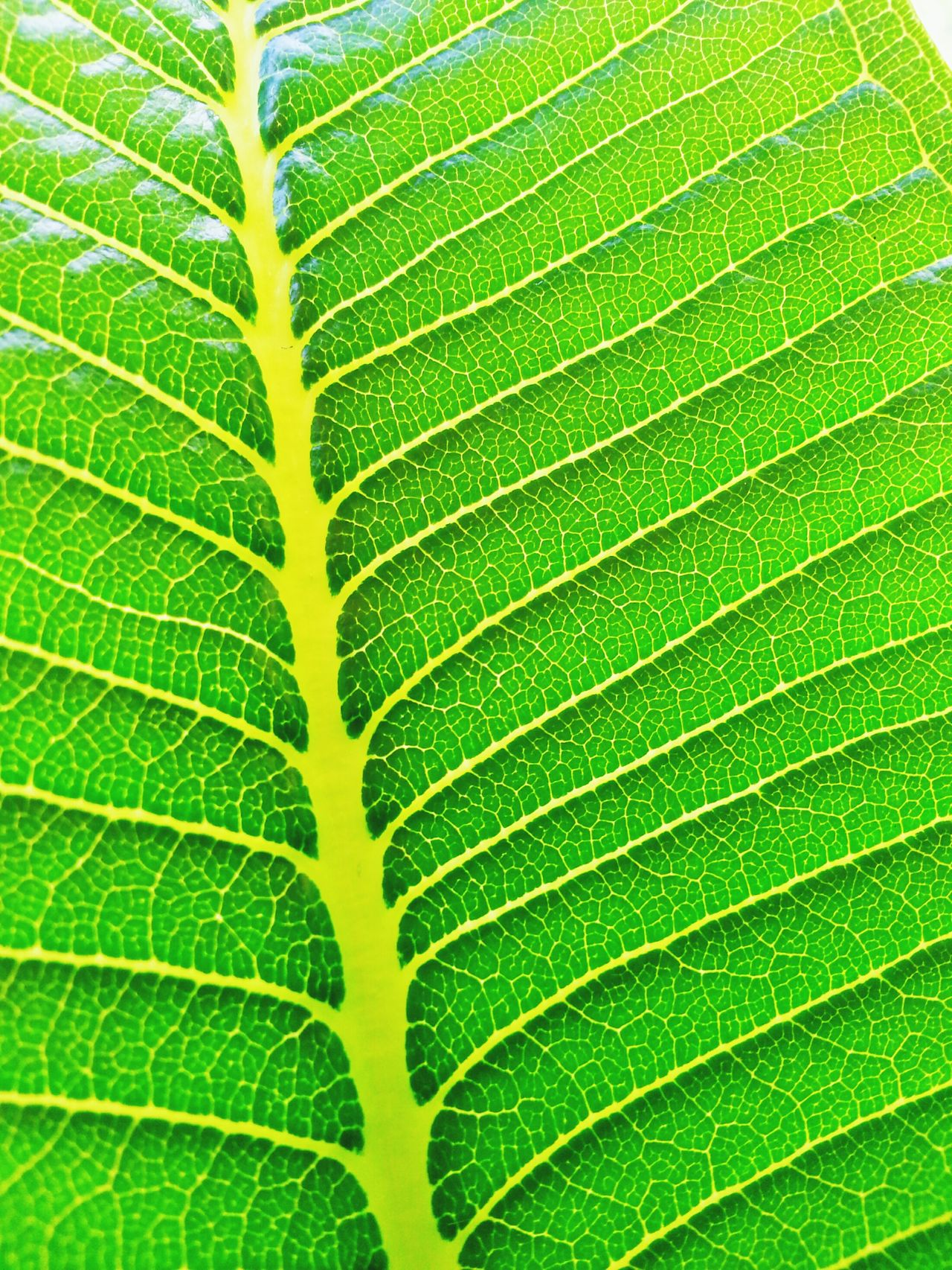 Green Leaf Naturephotography Nature