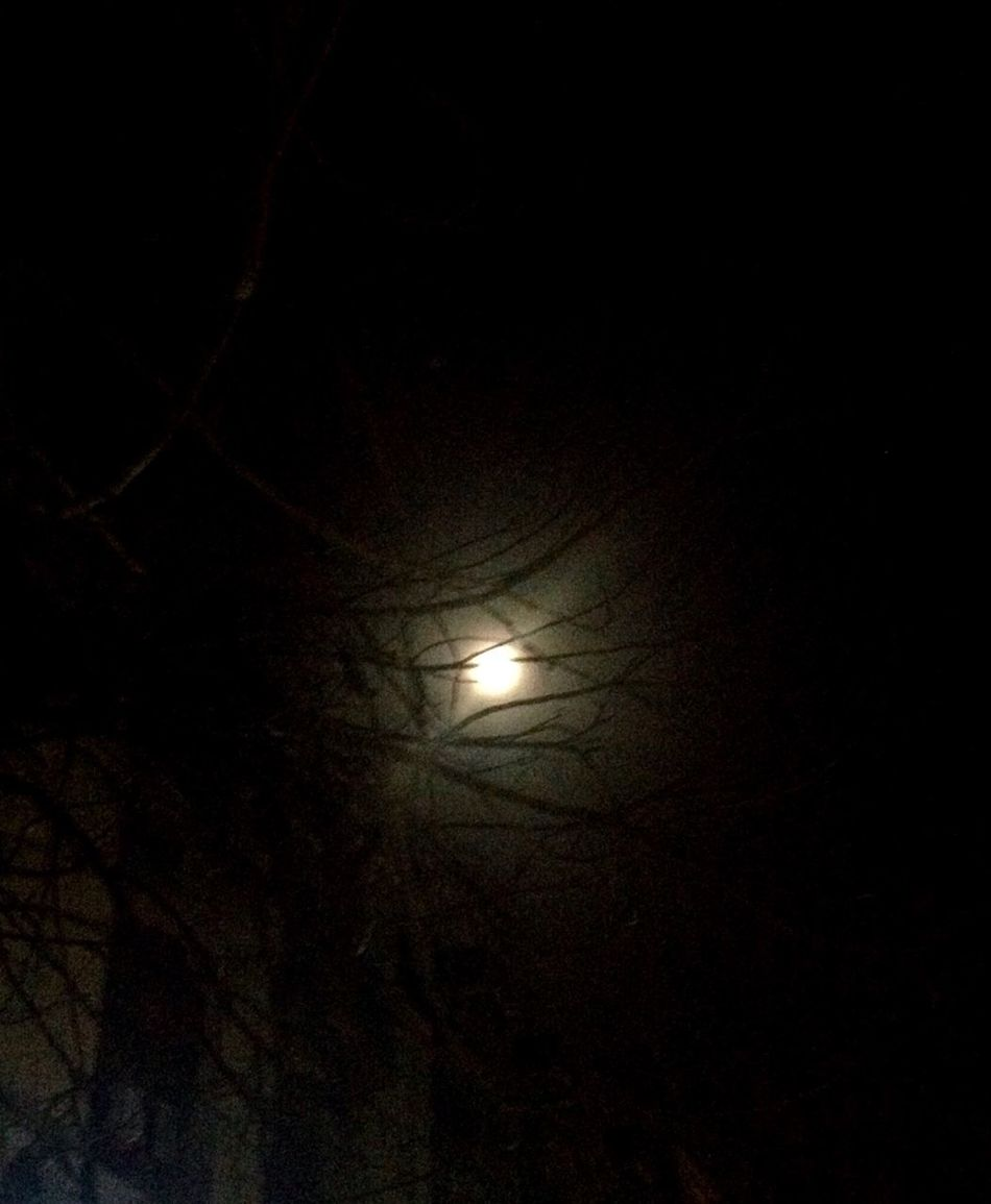 Full Moon 🌕 Full Moon No People Night Through The Branches