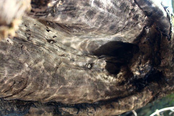 Nature Close-up Textured  Tree Riverside Photography Beauty In Nature EyeEm Best Shots Reflecting Water EyeEm Team