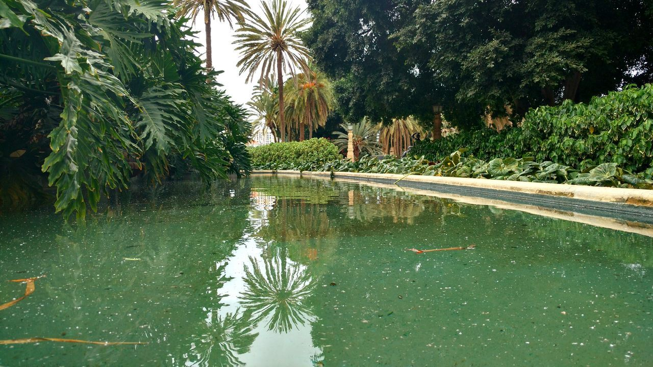 tree, water, growth, palm tree, reflection, nature, plant, day, no people, outdoors, green color, leaf, beauty in nature, lake, scenics, animal themes, sky
