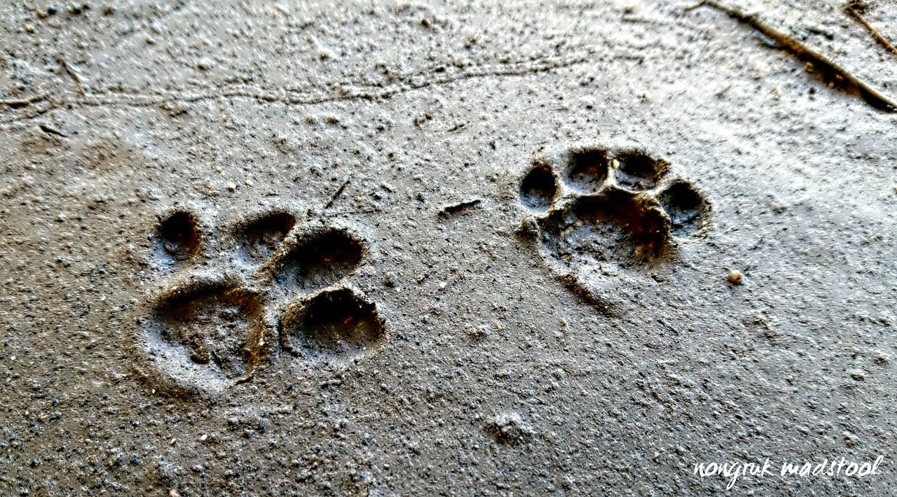 day, no people, high angle view, paw print, outdoors, close-up, nature