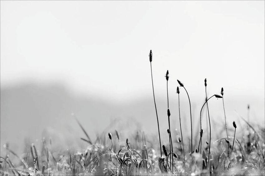 Nature Morning Morning Field Grass