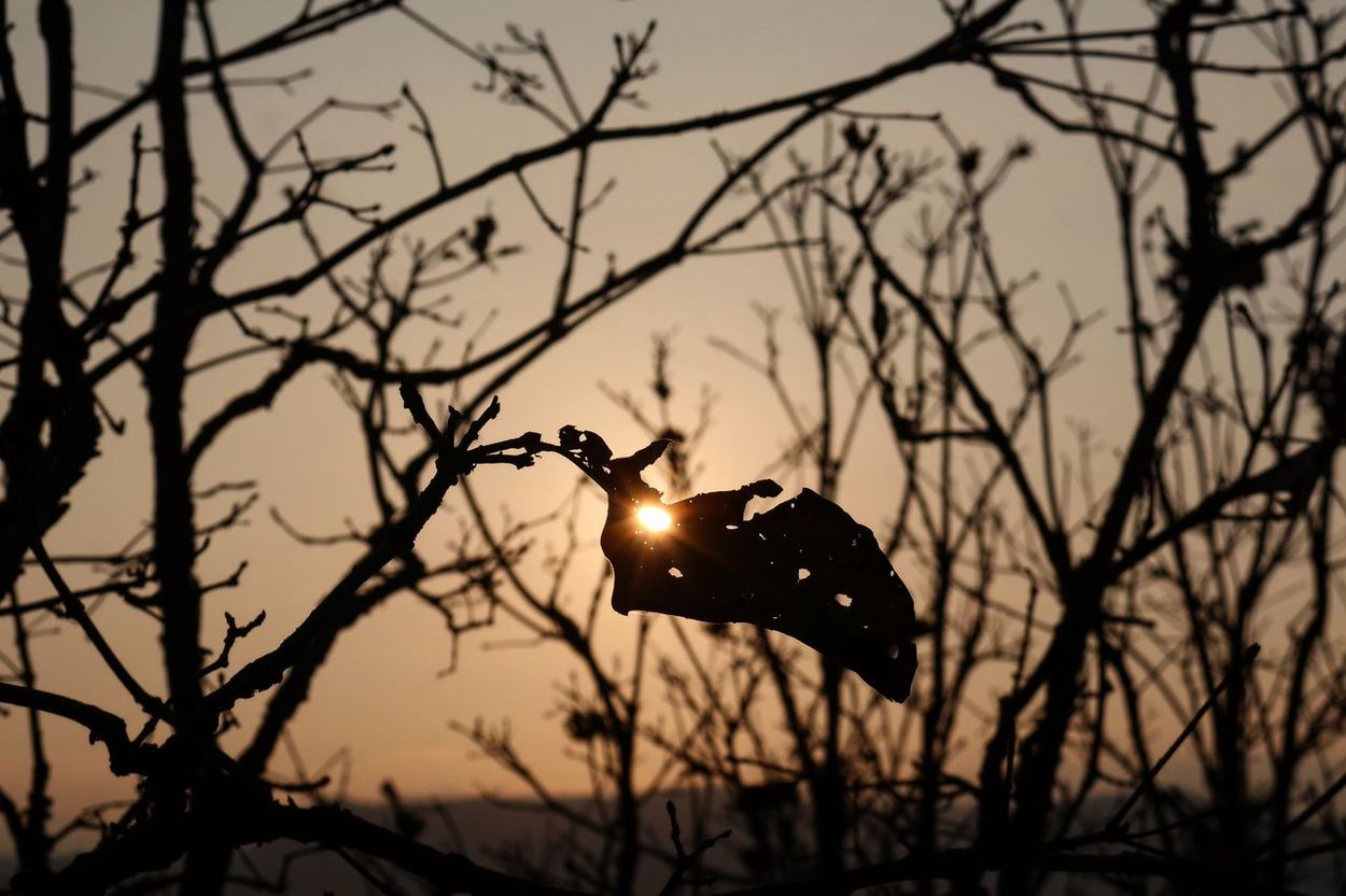 Nature Silhouette Travel Beauty In Nature Branch Explore Focus On Foreground Lifestyles Shadow Sky Sun Sunset Tree
