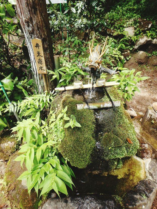 Japan Hakone 箱根 銭洗弁天 塔ノ沢 Moss 苔 Water