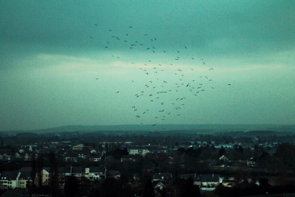 Halfhearted. City Cityscape Building Exterior Sky Architecture Large Group Of Animals Outdoors Day Birds Moody Sky Blue