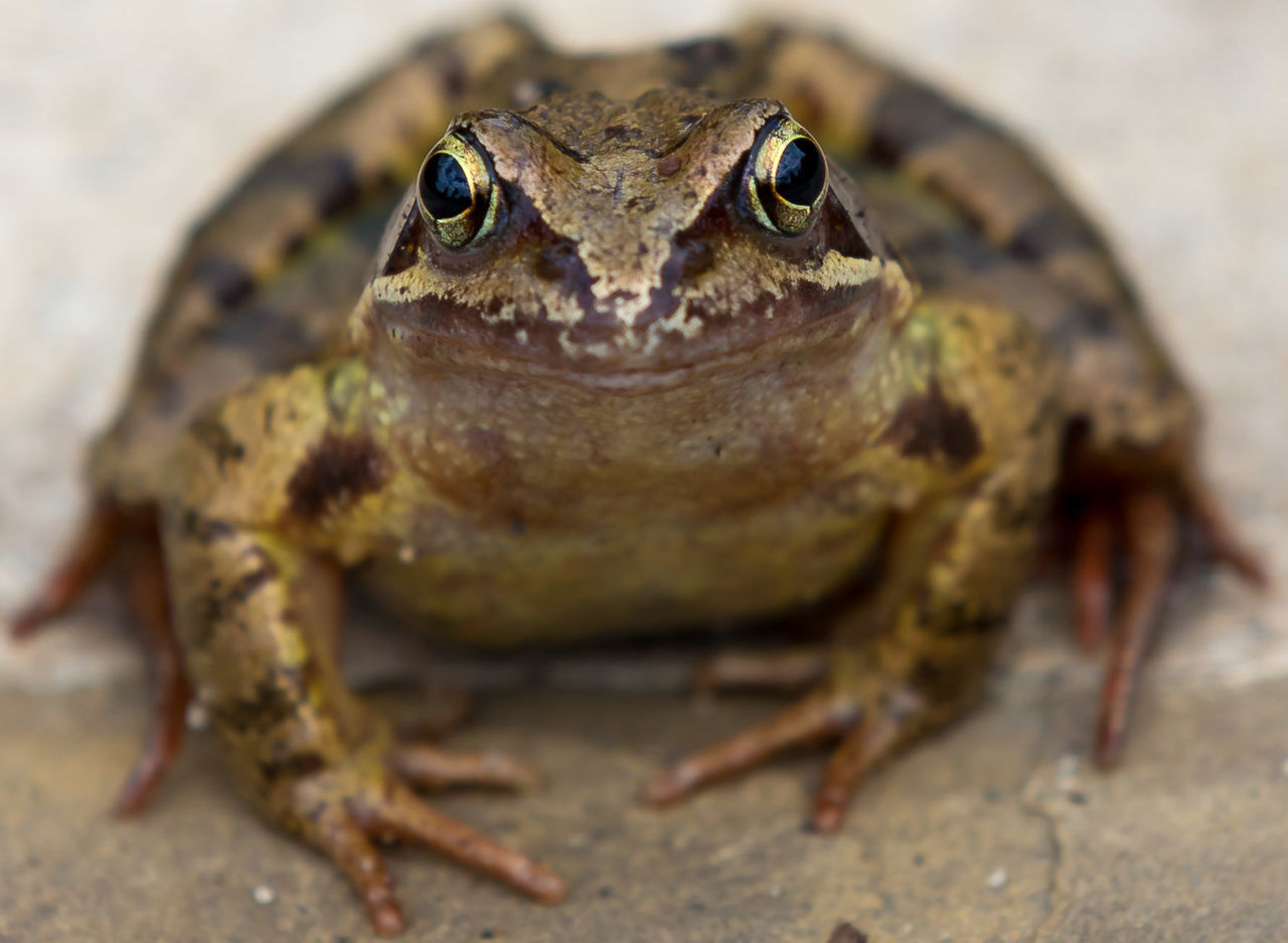 Beautiful stock photos of frog, Amphibian, Animal Themes, Animals In Captivity, City of London