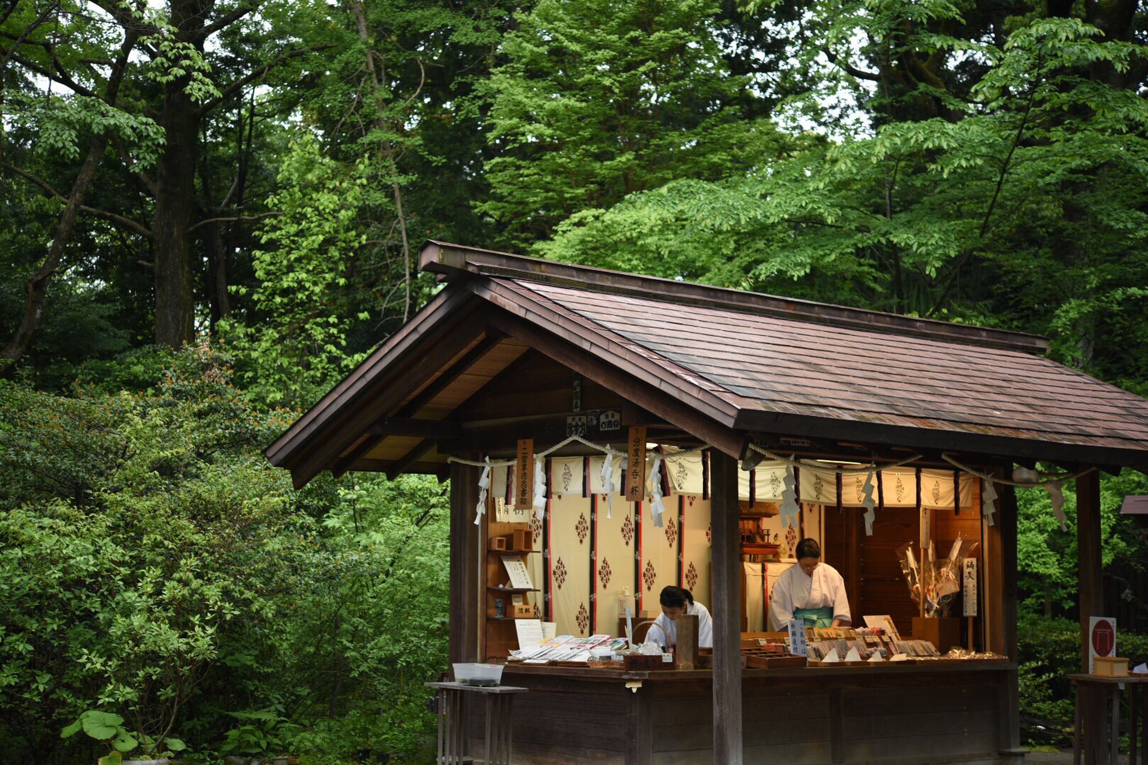 tree, built structure, wood - material, building exterior, architecture, sitting, bench, house, leisure activity, lifestyles, park - man made space, roof, forest, outdoors, men, day, growth, person