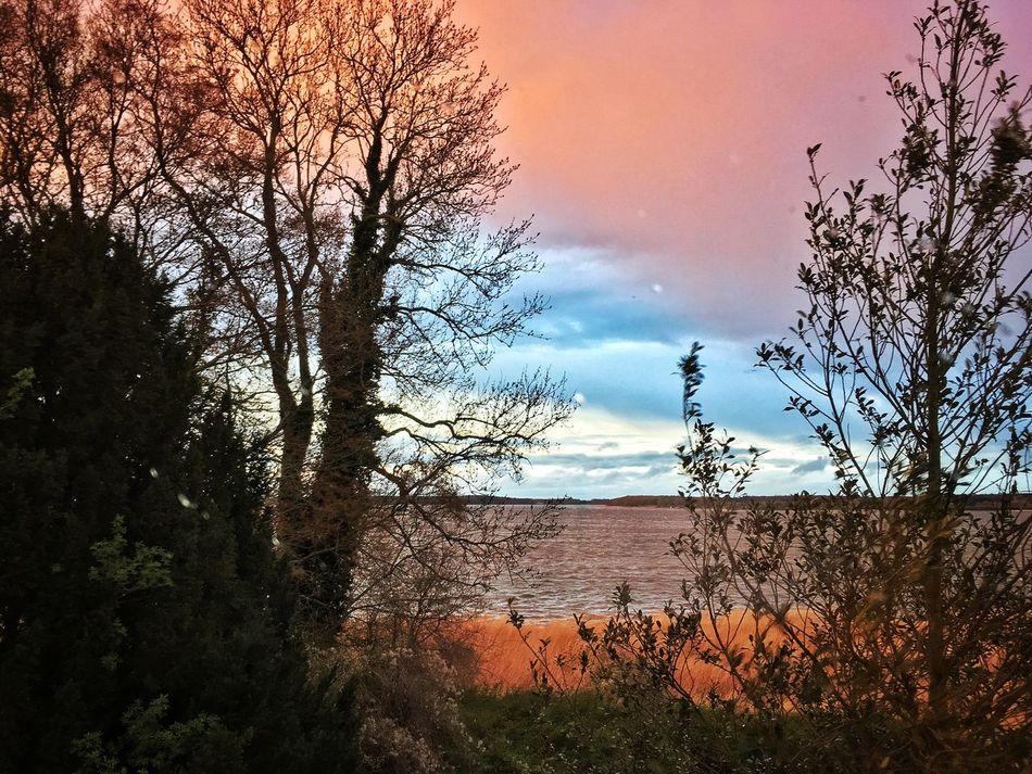 Sunset Sunset Sea Multi Colored Nature Beauty In Nature Tree Sky Cloud - Sky Baltic Sea Scenics Strelasund Ocean Bay