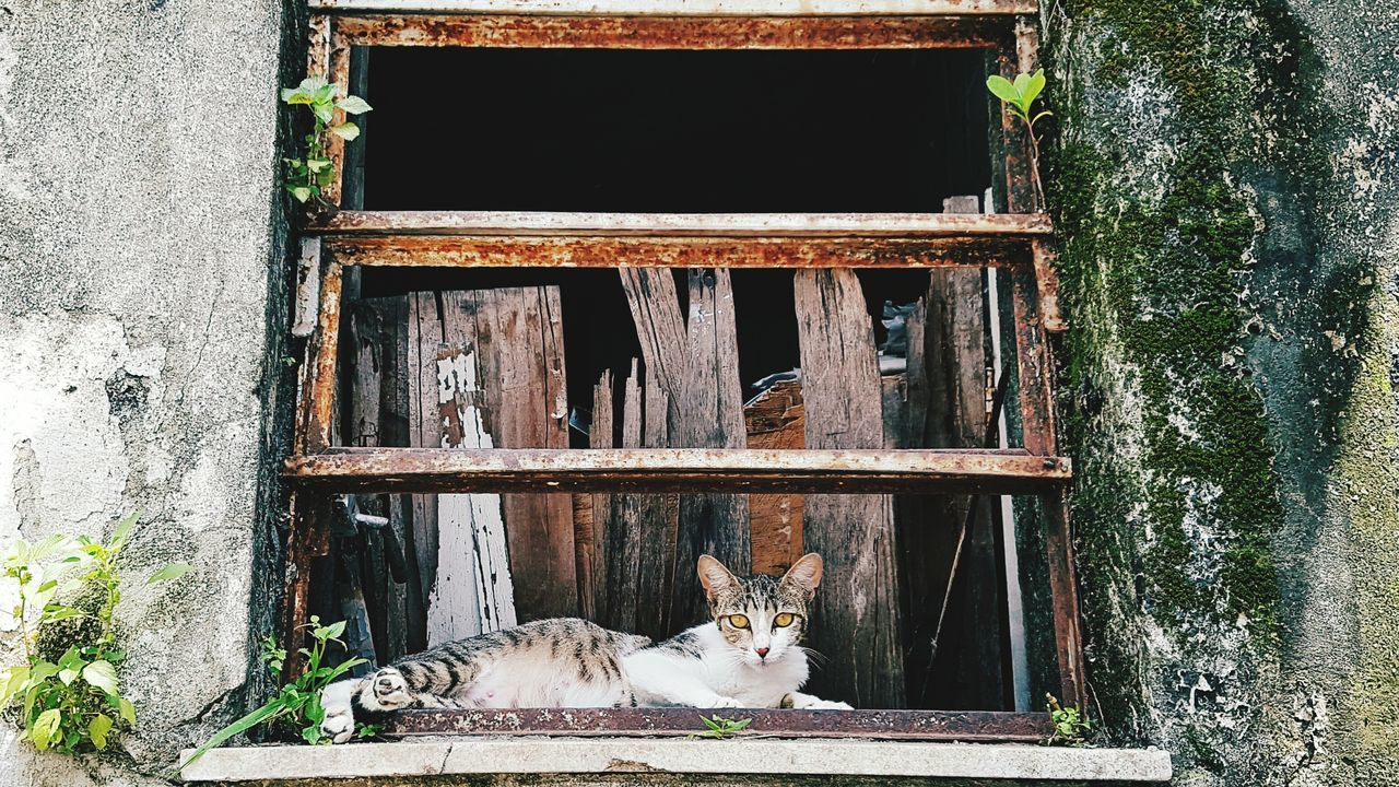 Outdoors No People Landscape Tranquil Scene Pose Cat Windows