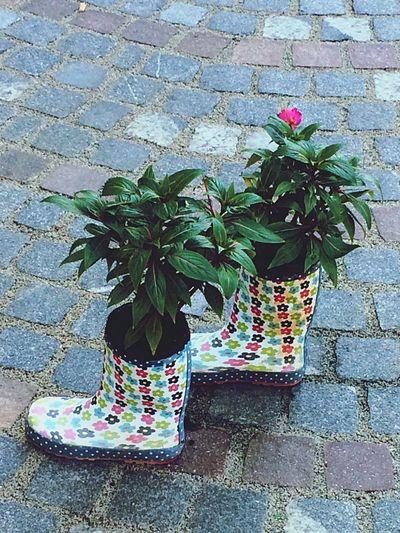Itsraining Rainy RainyDay Flowers Welly Walk Wellys Badweather Creative Inspirations