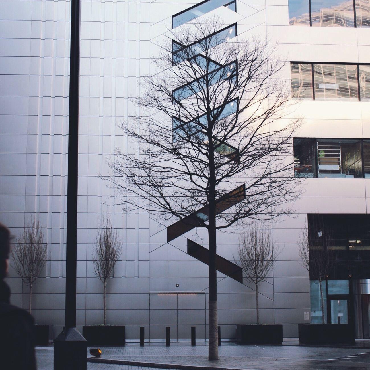 London, Pattern, Trees, Beautiful