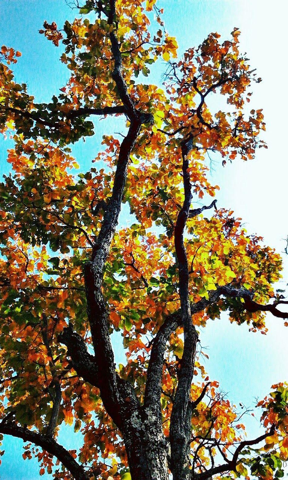 Seasonscollection Seasonchange Wild Trees