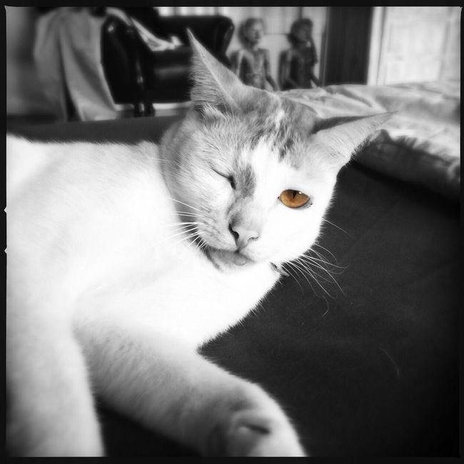 Popeye Cat Cute Pets Touge Out Color Splash Animal Photography EyeEm Best Shots IPhoneography Cat Lovers Eyes Colors