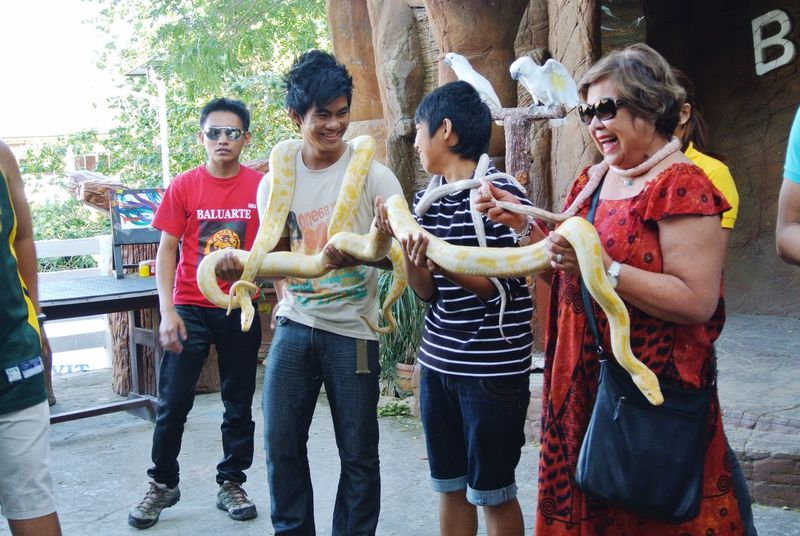 Feel The Journey what am I thinking! When we were in Vigan, Philippines we went to a privately owned zoo. They have a short show and asked participants from the audience. I was in front and my friend shoved me to stand. Unwillingly and for the fun of it I participated. Several small animals were handled to us to feel their body. At the end, of course, they brought the snakes from small size to a big one! I wasn't scarred at all, they don't feel slimy and revolting or maybe I'm just in panic mode that I didn't feel anything! Vigan Philippines Snakesofinstagram Snakes White Snake