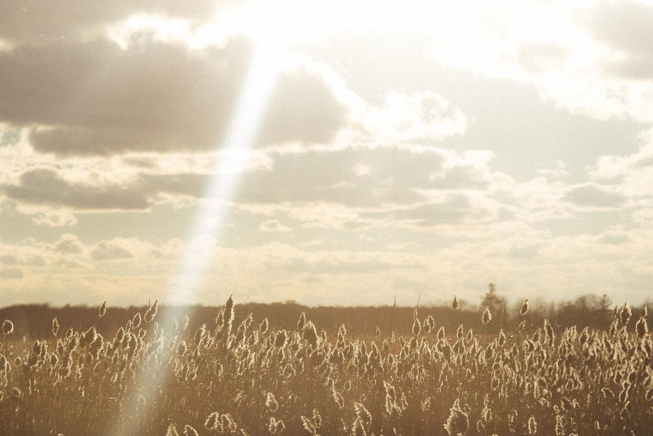 Happy Returns Agriculture Autumnal Beauty In Nature Cloud - Sky Day Fall Beauty Field Fields Of Gold Flares Golden Hour Golden Hour In Action Growth Idyllic Landscape Lens Flare Nature No People Outdoors Rural Scene Scenics Sky Summertime Tranquil Scene Tranquility Wheat Field