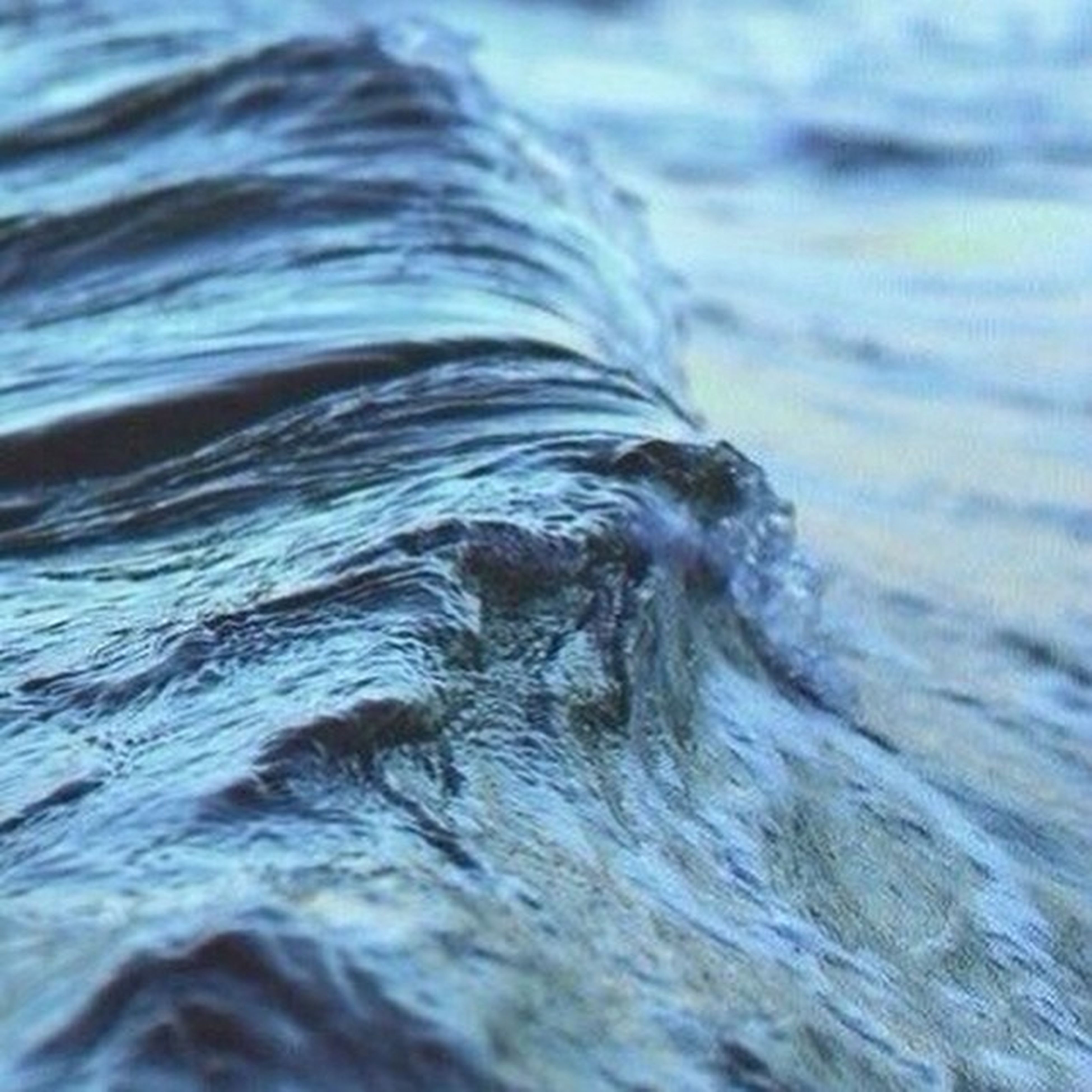 water, waterfront, sea, rippled, one animal, wave, motion, nature, animal themes, splashing, beauty in nature, close-up, day, swimming, selective focus, outdoors, no people, water surface, surf, tranquility