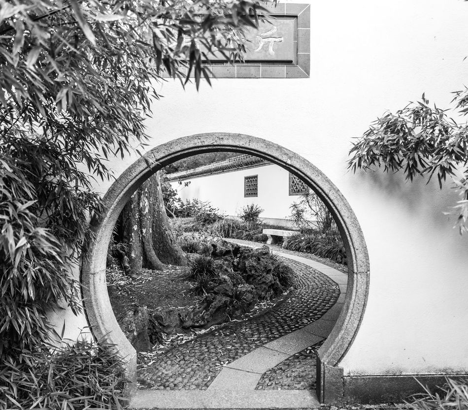 tor Architecture Asian Garden Bamboo Garden Built Structure Garden Garden Photography Garten Gate Growth Nature Outdoors Plant Tree
