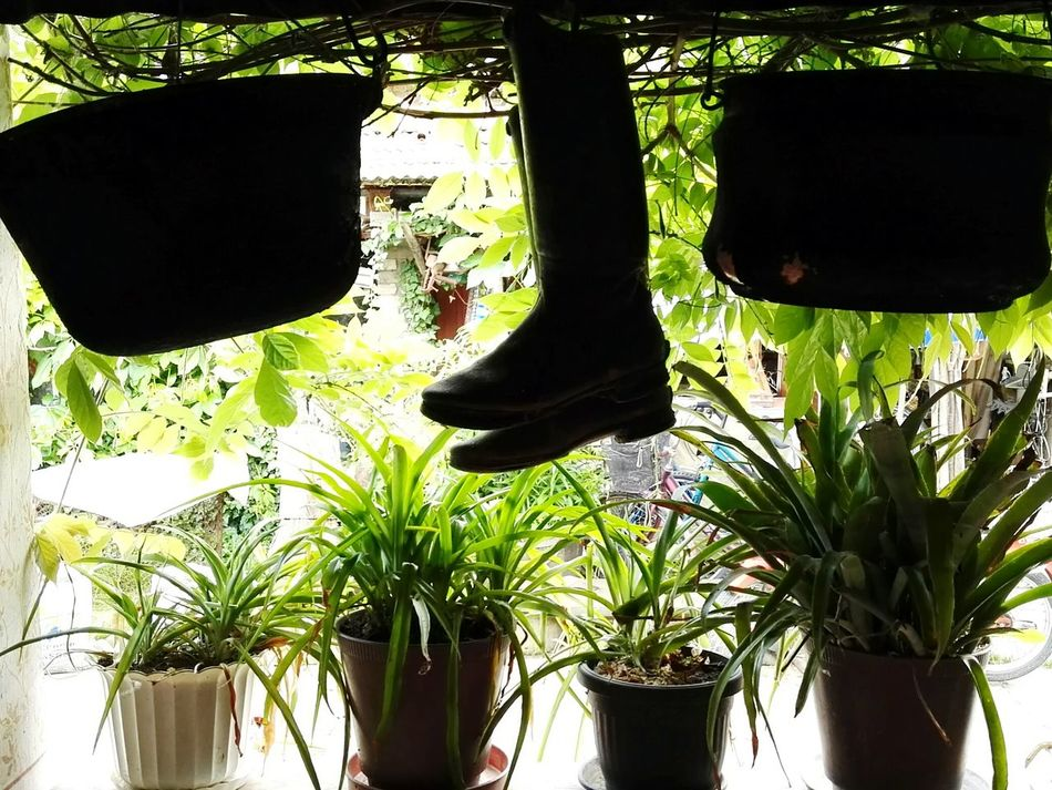 Boots Bucket flowers Verandaview Showcase July Home Is Where The Art Is