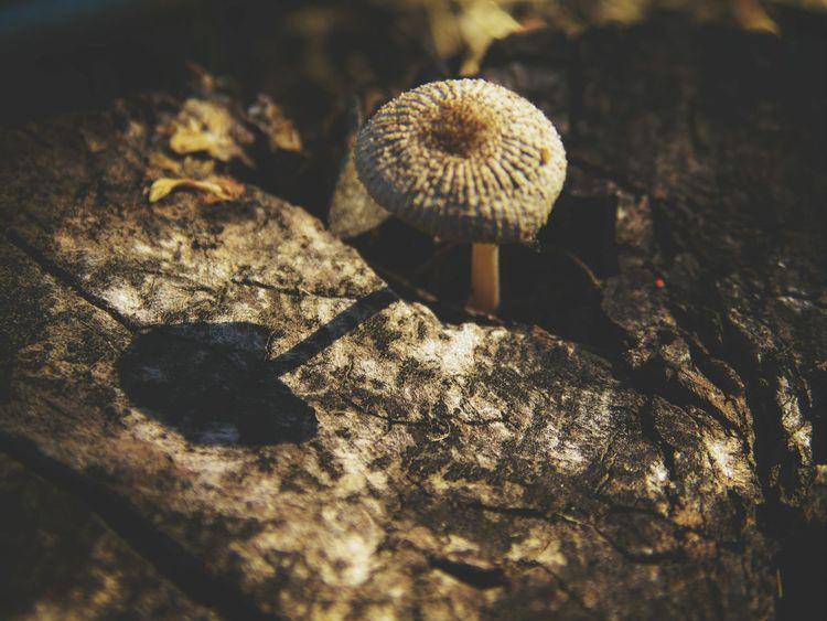 Shroomery EyeEm Nature Lover Macro Nature