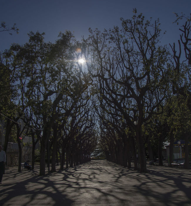 Beauty In Nature Diminishing Perspective Empty Empty Road Eye4photography  EyeEm Gallery EyeEm Nature Lover Footpath Growth Lens Flare Long Nature No People Outdoors Prospect Park Sky Sun Sunlight The Way Forward Tranquil Scene Tranquility Tree Treelined Vanishing Point Walkway