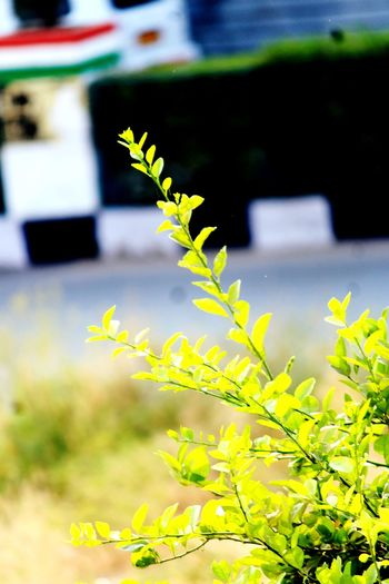 Plant Outdoors Leaf Day Focus On Foreground Nature No People Growth Close-up Grass Rural Scene Freshness