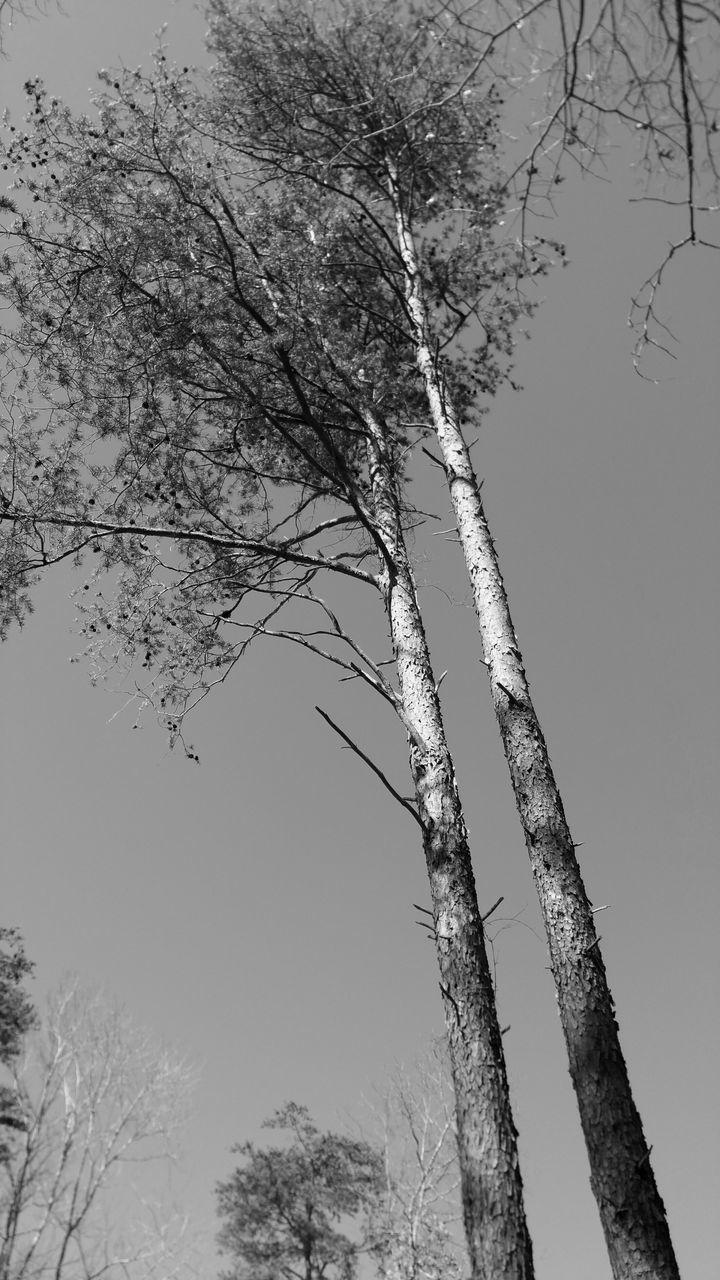 tree, nature, branch, beauty in nature, no people, day, outdoors, tranquility, low angle view, scenics, growth, tree trunk, bare tree, sky