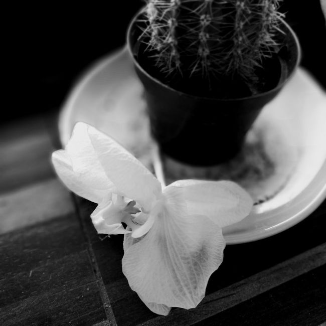 Black And White Flower Head Plant Fragility Black Background No People Day Cactus Orchid Blossoms