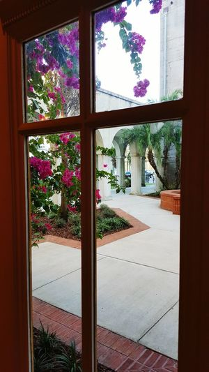 Window Tree Indoors  Day Relaxation Scenics Tranquility Outdoors Building Exterior Flowers,Plants & Garden Love Majestic Fragility Happiness Cross Jesuslovesme