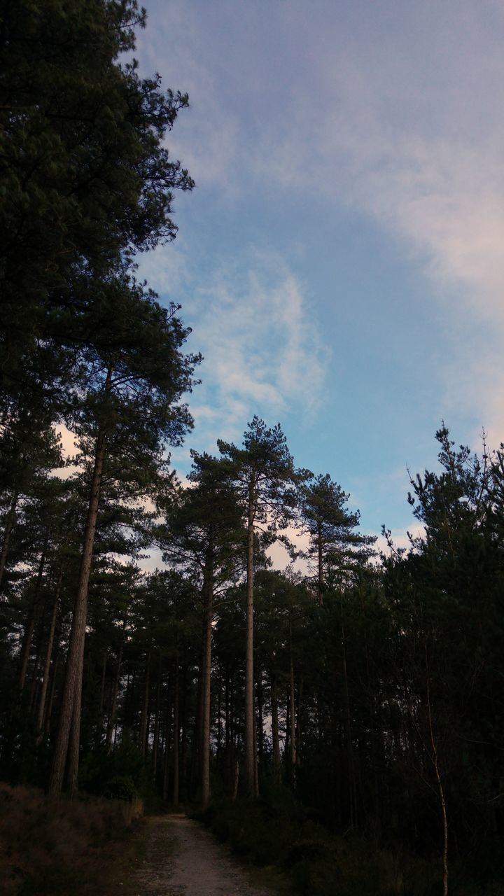 tree, forest, nature, growth, sky, no people, outdoors, low angle view, beauty in nature, day