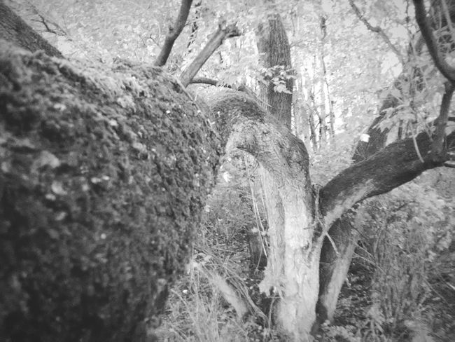 Monochrome Photography Wilderness Outdoors Beauty In Nature Tranquil Scene WoodLand Branch Depth Of Focus Depth Perception Depth And Contrast Depth Angles EyeEm Nature Lover