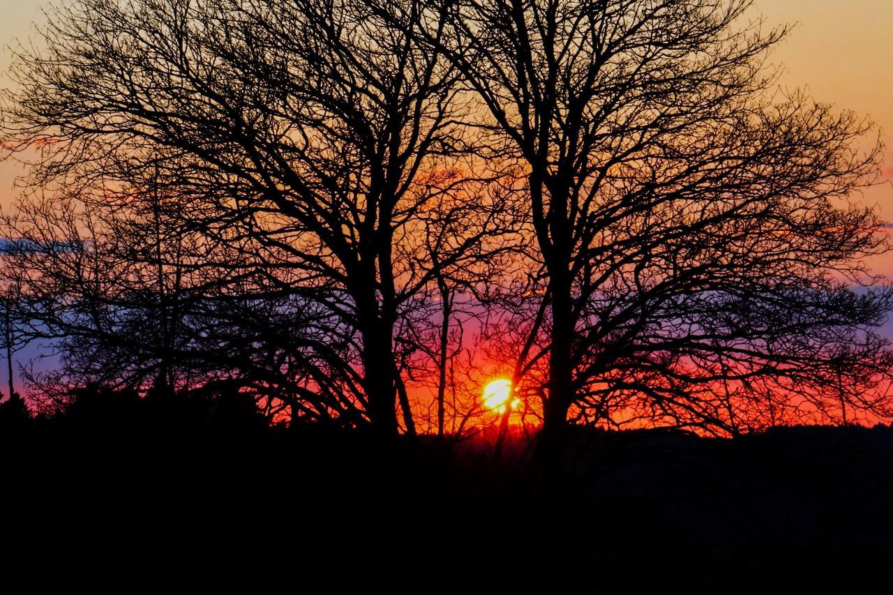 Tree Sunset Sky Beauty In Nature Tranquil Scene