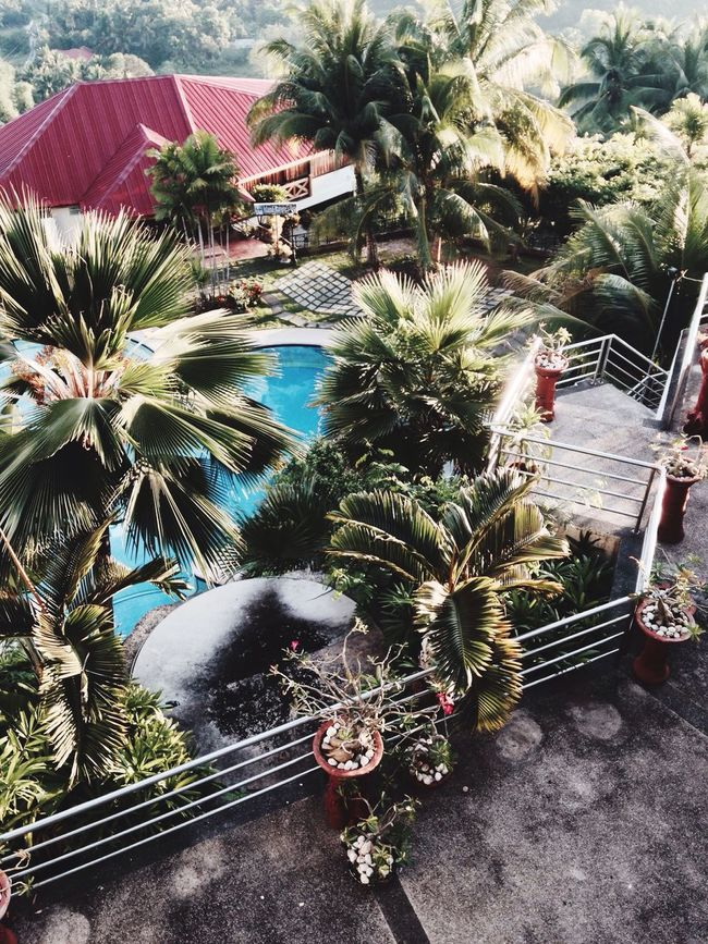 A Bird's Eye View Bohol Cebu Philippines Pool Resort Palm Trees Tropical Stairs Stairs_collection Stairs & Shadows Stairsporn