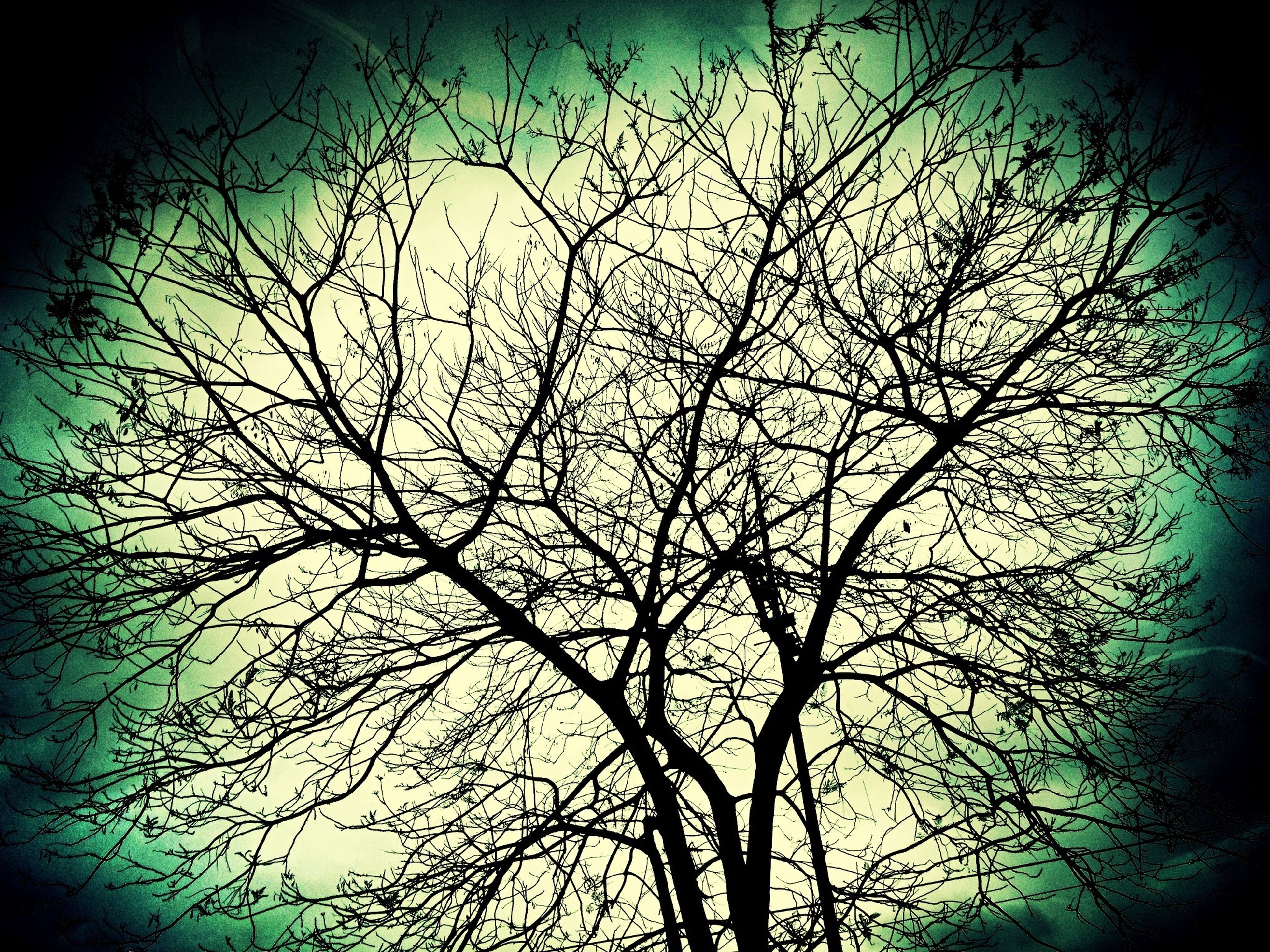 bare tree, branch, low angle view, tree, silhouette, auto post production filter, transfer print, nature, sky, dusk, night, no people, clear sky, tranquility, outdoors, backgrounds, dark, growth, full frame, vignette