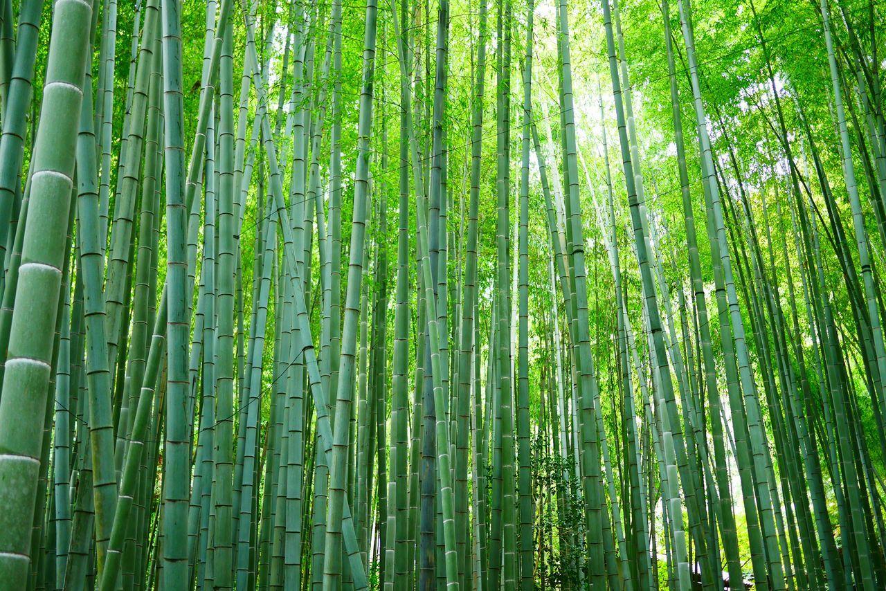 Bamboo Japanese Garden Kamakura Japan Japanese Culture Japanese Style 和 Wabi-sabi View Market Bestsellers April 2016 Bestsellers