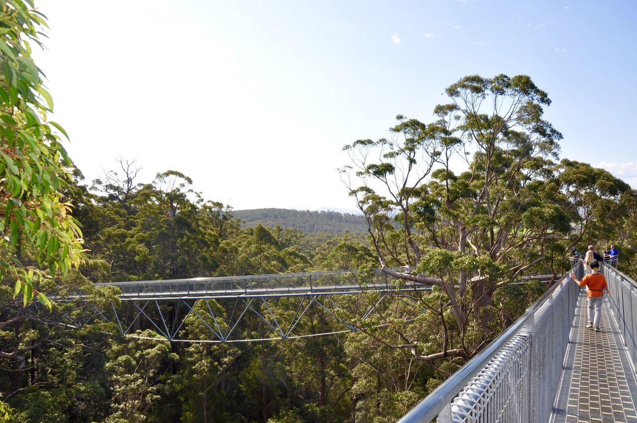 Tourists on the unique Tree Top Walk in the tree canopy of the Valley of the Giants near Denmark, Western Australia. Beauty In Nature Bridge Canopy Day Elevated View Engineering Green Color Lush Foliage Nature Outdoors Railing Remote Scenics Sky Solitude Steel Tourists Tranquil Scene Tree Tree Top Walk Trusses Vacations Valley Of The Giants Western Australia WoodLand