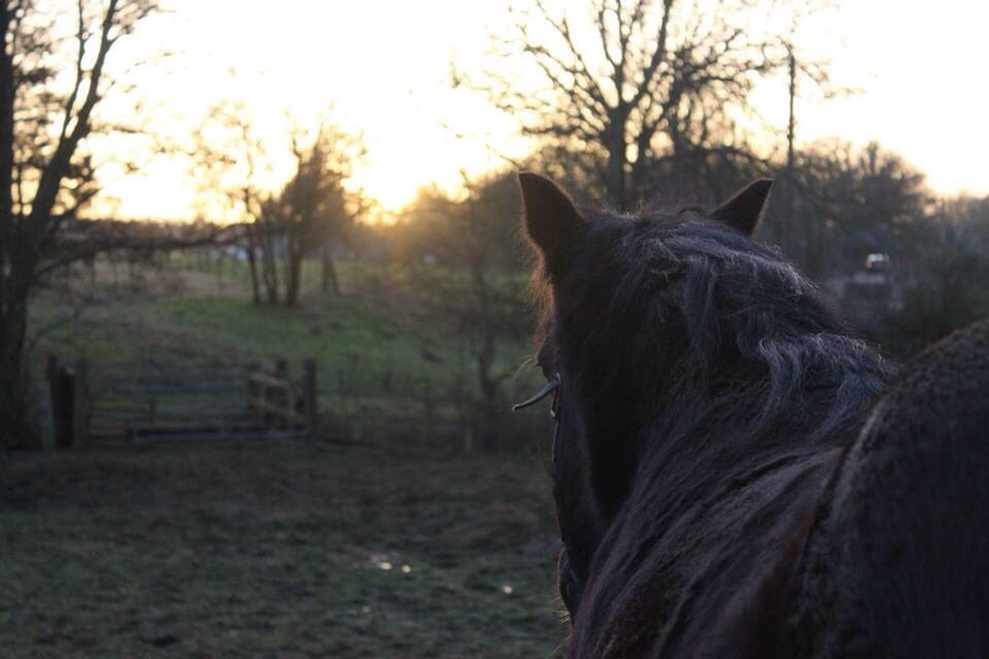 animal themes, domestic animals, mammal, horse, field, sunset, livestock, tree, one animal, landscape, grass, nature, rural scene, fence, sky, grassy, tranquility, tranquil scene, herbivorous, standing
