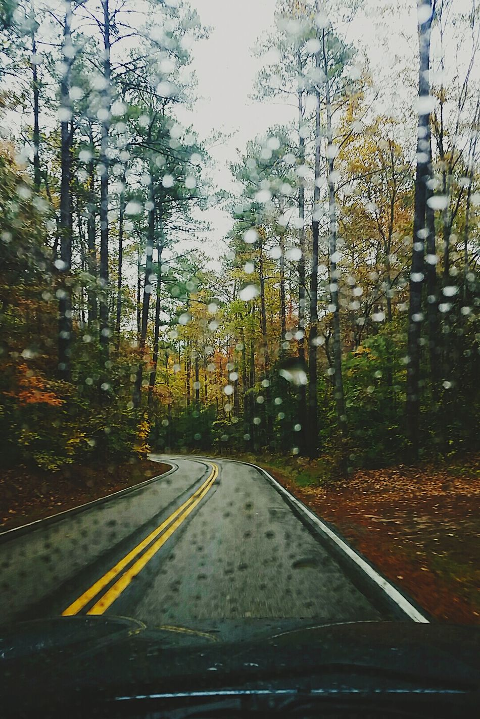 11•5•15 // Dreary Day Autumn Drives