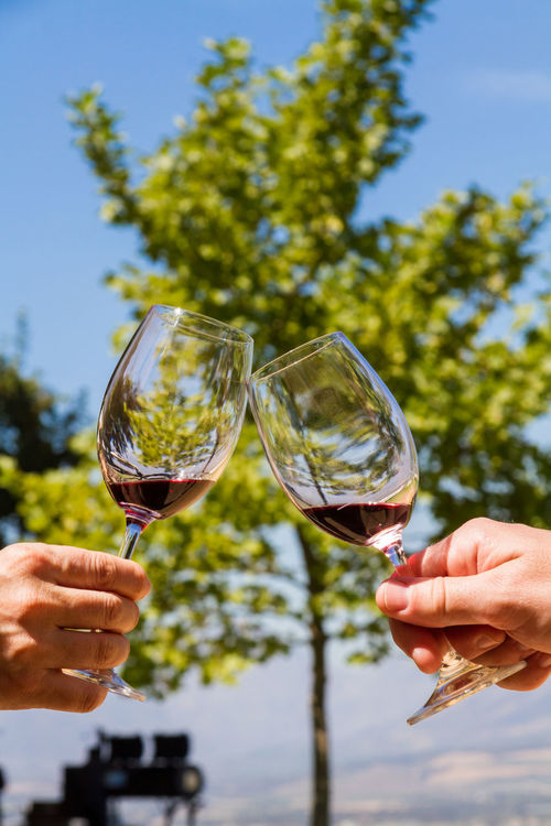 Toasting with Wine Adult Adults Only Alcohol Blue Celebration Celebratory Toast Cheering Close-up Drink Drinking Focus On Foreground Food And Drink Holding Human Body Part Human Hand Partnership - Teamwork People Red Wine Refreshment Togetherness Two People Vertical Wine Wine Tasting Wineglass