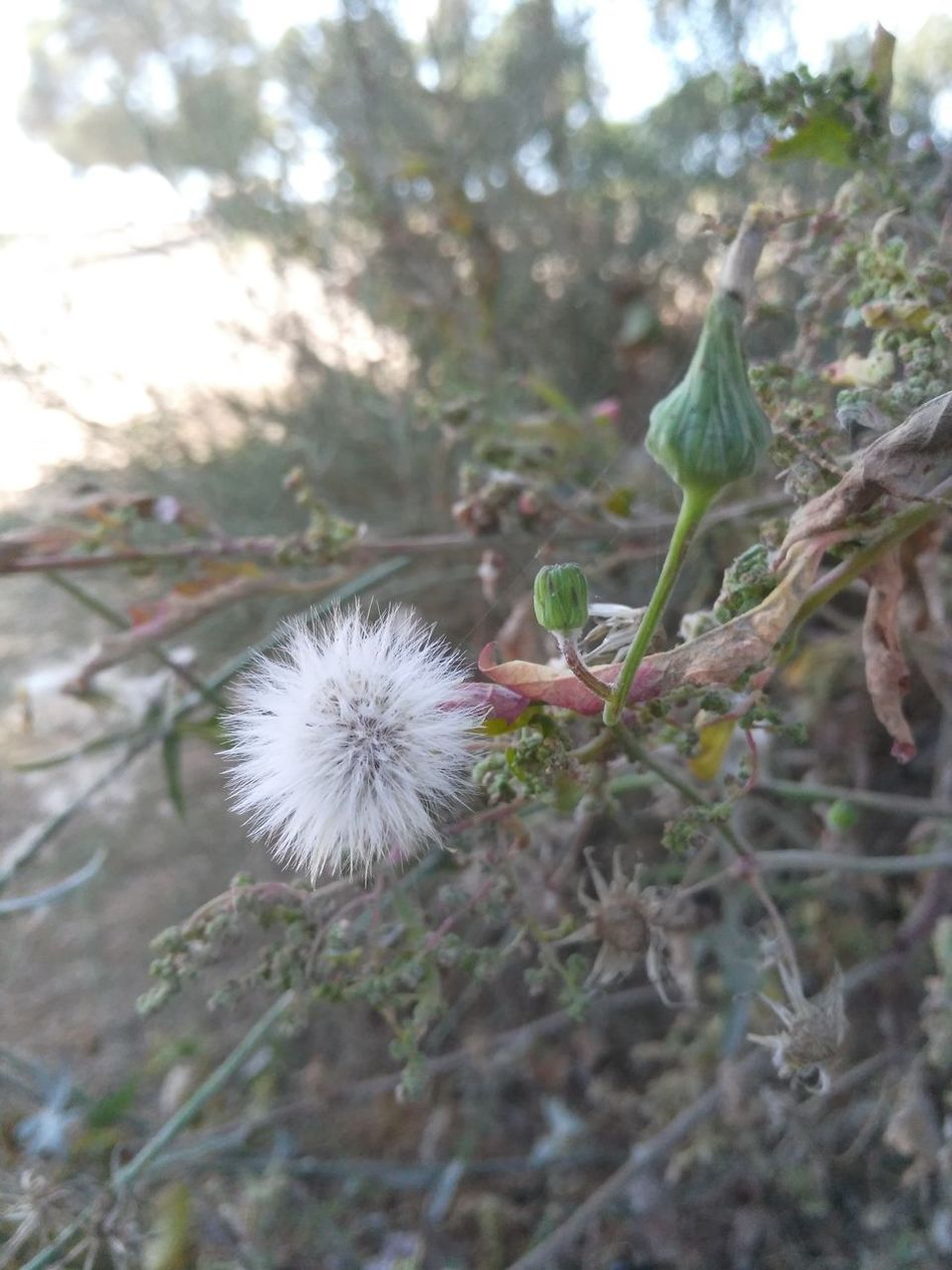 Nature's Diversities Dry Flwors White Flower Green Flowers