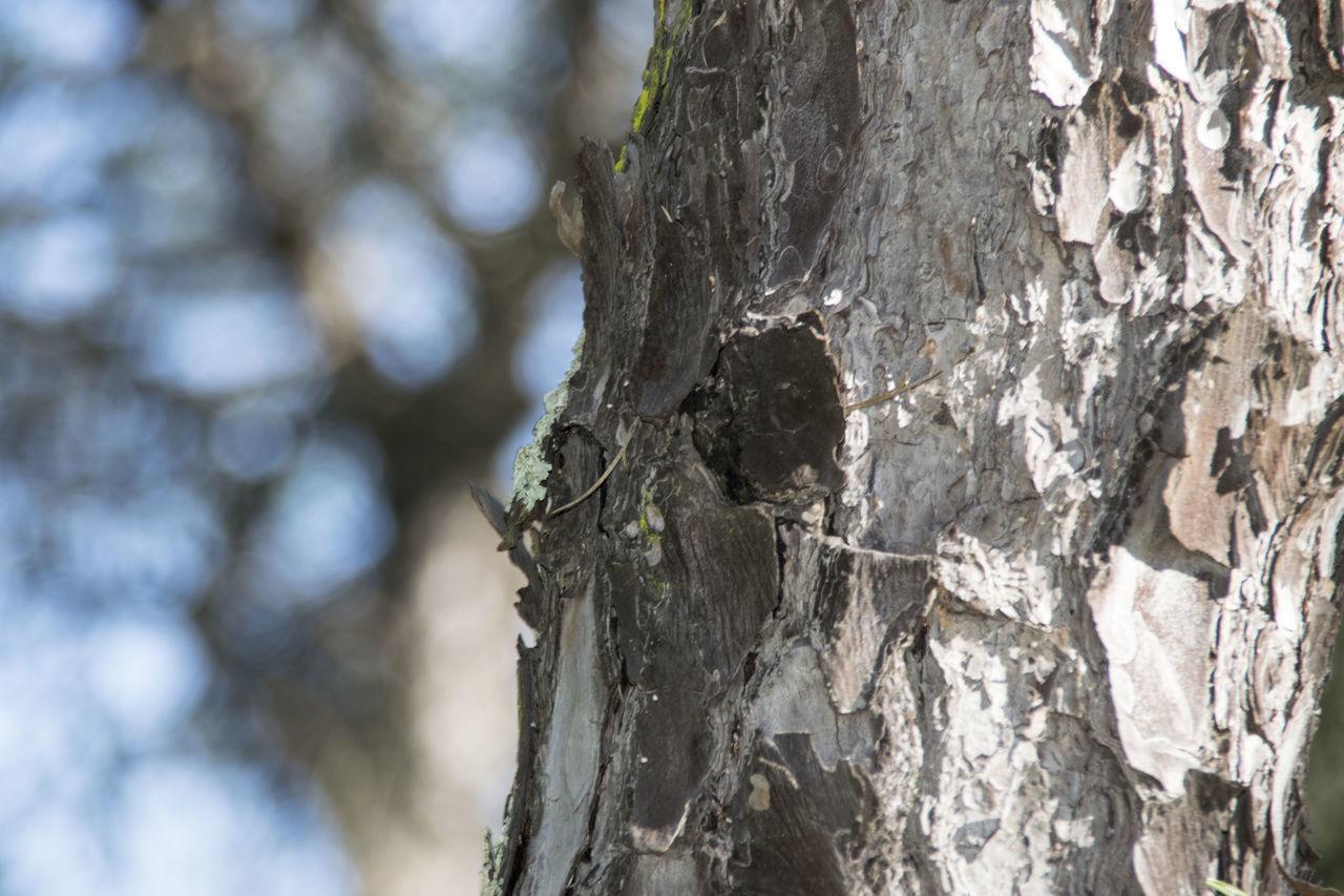 Bosque Cielo Limpio Detalle Nature Pino Sky Soleado Tree Tronco árbol