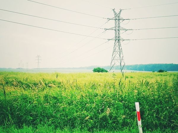 EyeEmNewHere Cable Electricity  Power Line  Fuel And Power Generation Rural Scene Power Supply Electricity Pylon Field Grass Sky Nature Agriculture Telephone Line Technology Landscape Day No People Outdoors Beauty In Nature Clear Sky Let's Go. Together. Breathing Space Gridlove