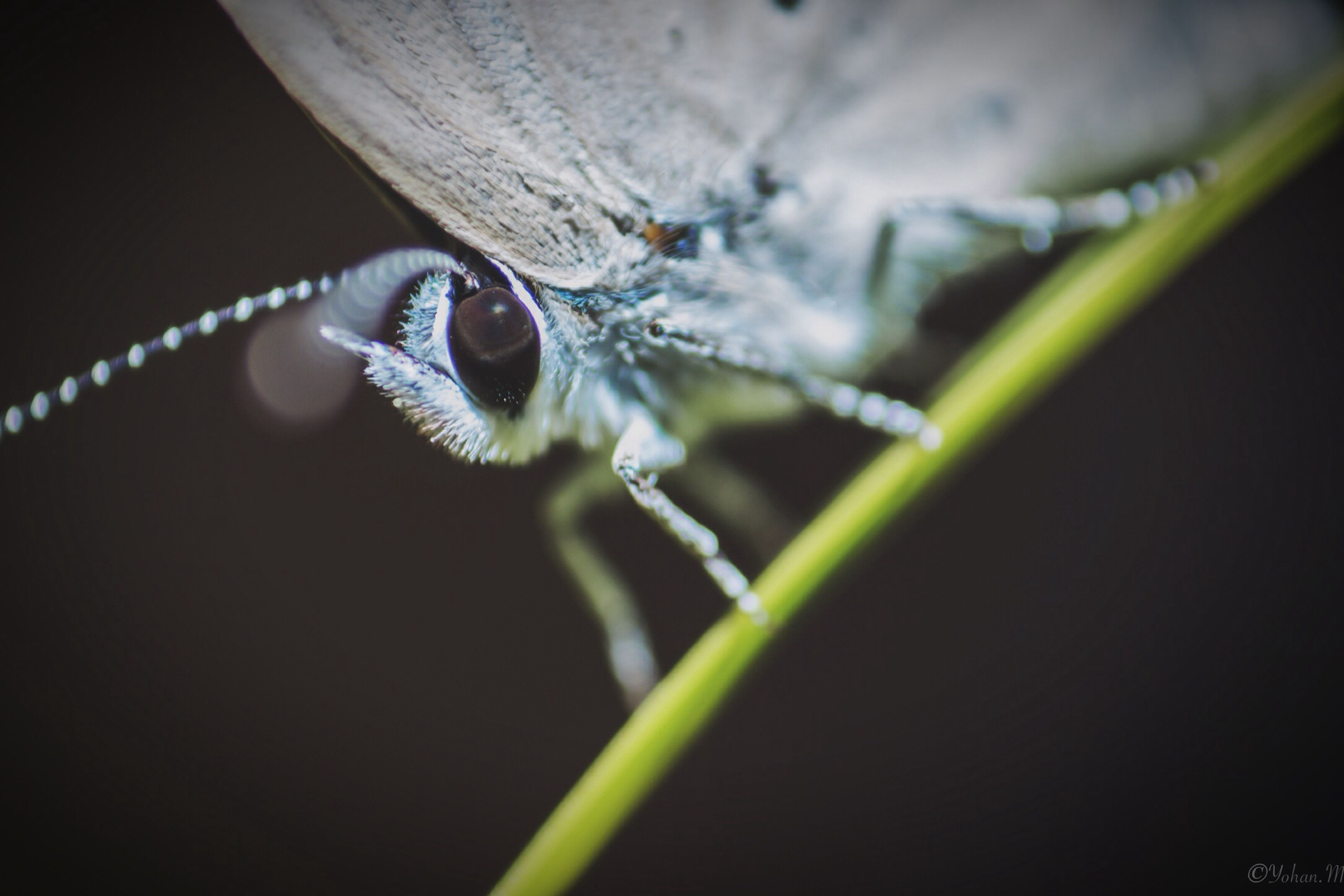 one animal, animal themes, insect, animals in the wild, wildlife, close-up, dragonfly, focus on foreground, selective focus, spider, nature, zoology, macro, stem, full length, animal wing, animal antenna, animal body part, day