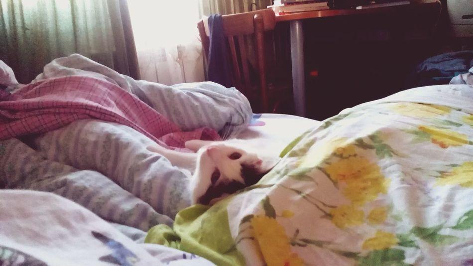 Привет от кроватного котика