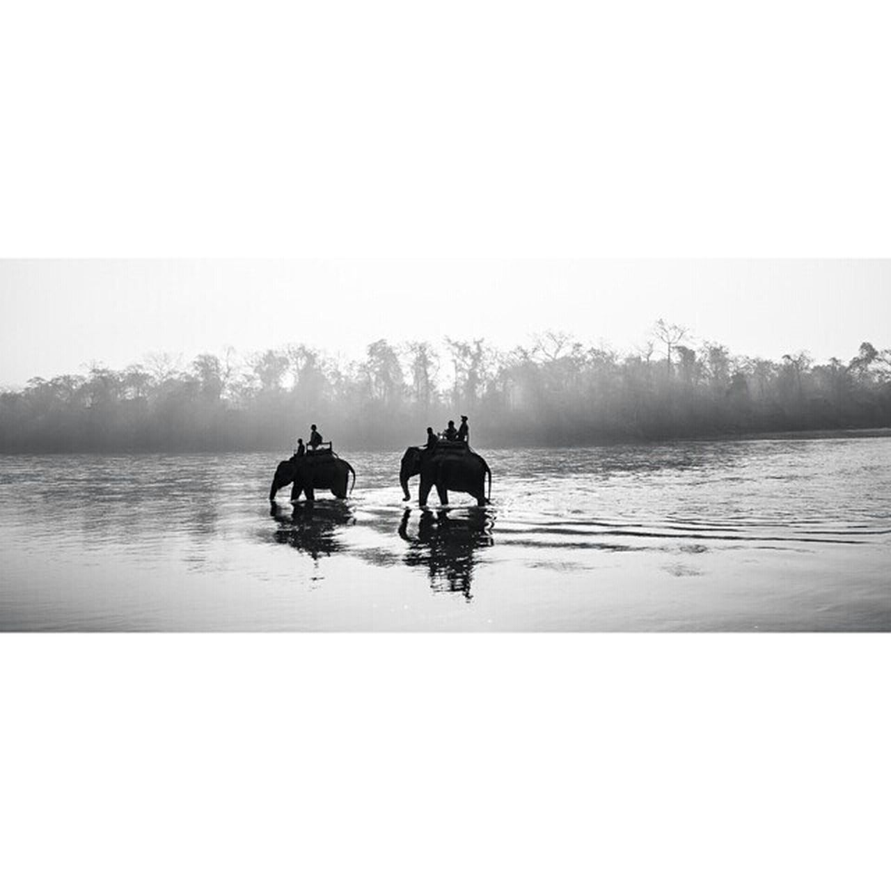 Blackandwhite Elephant ♥ Elephantride Elephant Lover ♡ Humainsbestfriend River View Popular Eyem Nature Lover Nepal♥