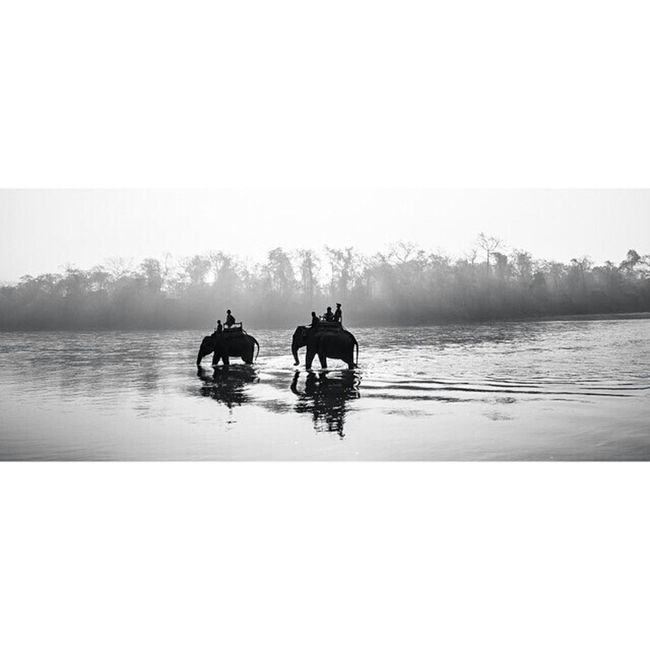 Blackandwhite Elephant ♥ Elephantride Elephant Lover ♡ Humainsbestfriend River View Popular Eyem Nature Lover Nepal♥