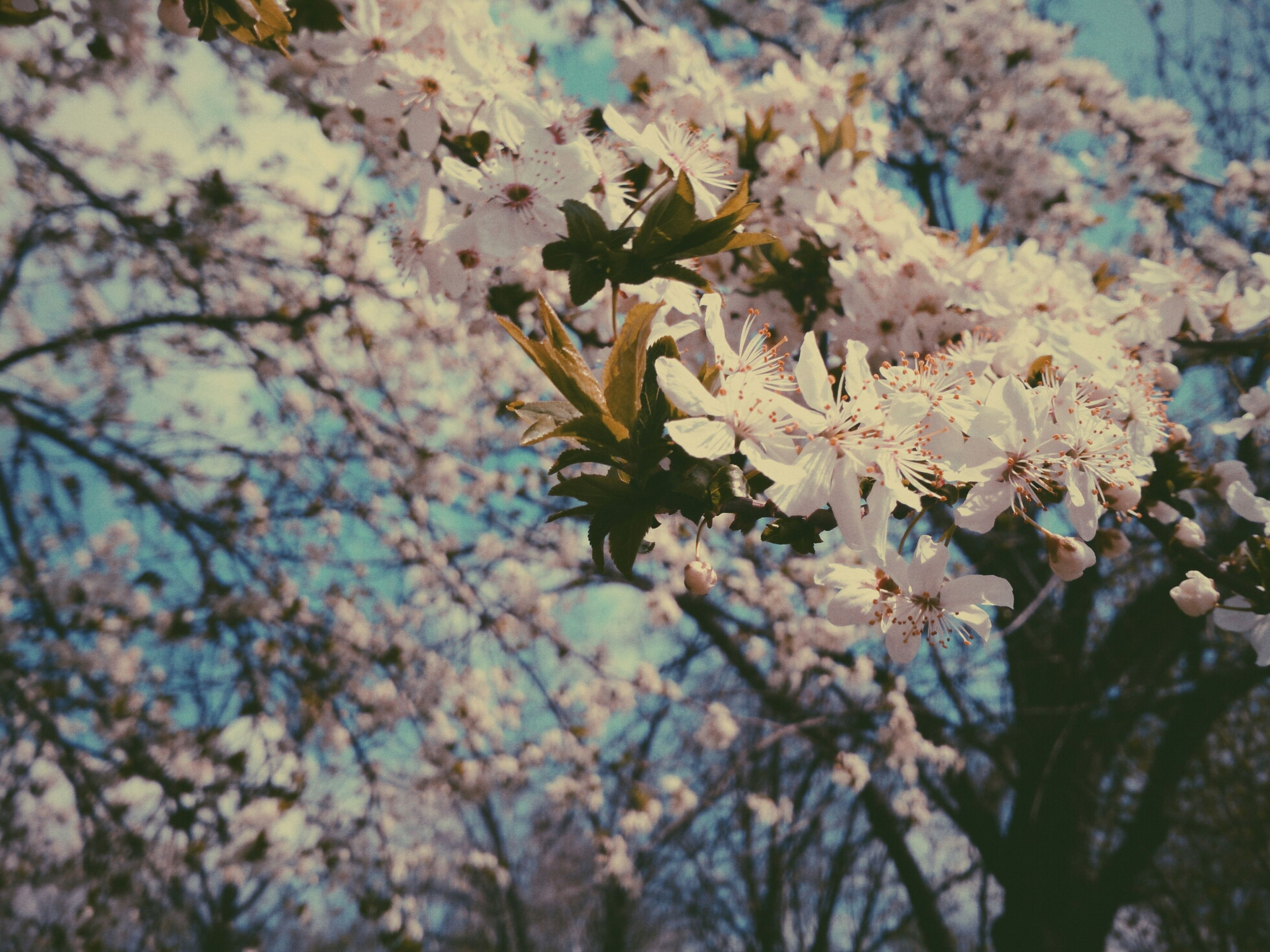 flower, growth, freshness, fragility, beauty in nature, branch, nature, focus on foreground, tree, close-up, blossom, blooming, plant, in bloom, selective focus, petal, springtime, day, outdoors, botany