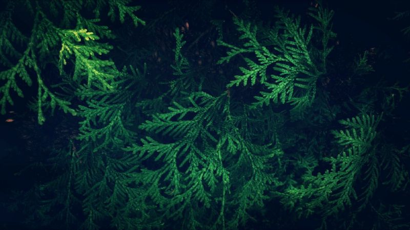 Nature Green Color Beauty In Nature Backgrounds Outdoors Eye4photography  EyeEm Nature Lover Darkness And Light Negative Space Getting Inspired Authentic Moments Front View Tadaa Community