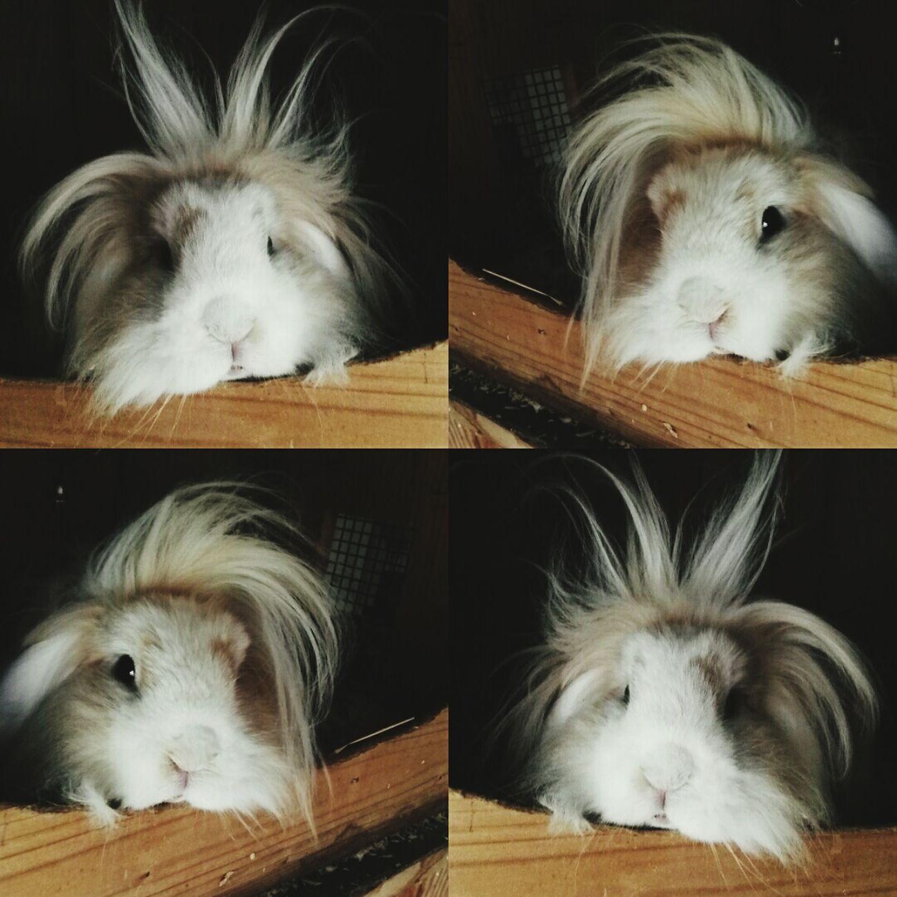 Henry <3 Mybunny Fluffy Cutenessoverload !!